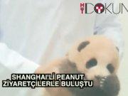 Çinli panda Peanut görücüye çıktı