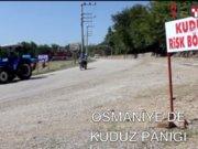 OSMANİYE'DE KUDUZ KARANTİNASI