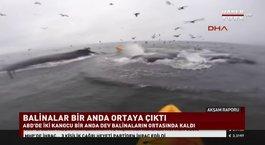 Dev balinaların arasında kaldılar!