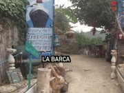 La Barca'nın domuzları