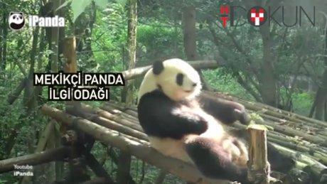 Panda formunu mekikle koruyor!