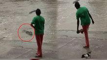 Avustralya'da timsahı terlikle kovalayan kadın