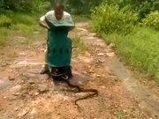 Yılan avcısı 285 tane yılanı aynı anda bırakınca...