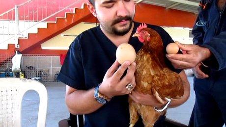 Dev yumurta görenleri şaşırttı!