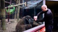 Orangutan için özel bir gösteri