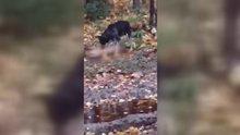 Köpek ölen arkadaşını uyandırmaya çalıştı