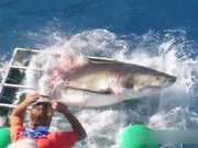 Dalgıçların kafesine Köpekbalığı daldı!