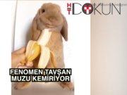 Tavşan Zlatan muz yiyor