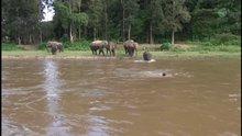 Cankurtaran yavru fil