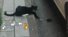 Tom ve Jerry'i akıllara getirdi