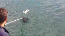 Denizin ortasında kalan kedi böyle kurtarıldı