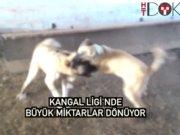 Türkiye'nin en çok kazandıran ligi 'Kangallar'!
