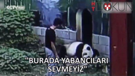 Panda, kafesine izinsiz giren adamla güreşti