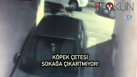 Arnavutköy'de Sokak Köpeği Terörü