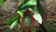 Kamuflaj ustası böcekler