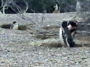 Dünya bu penguenleri konuşuyor!