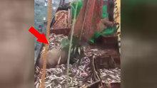 Rus balıkçılar yakaladıkları şeyi görünce şoke oldu!
