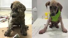 Tutkala batırılan köpek kurtarıldı!
