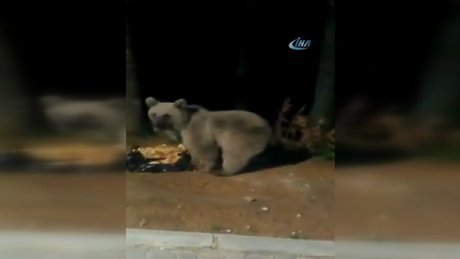 Aç kalan ayıları elleriyle beslediler