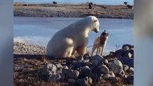 Bağlı köpeğin yanına kutup ayısı geldi ve...