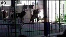 /video/haber/izle/gosteri-sirasinda-aslanin-saldirdigi-egitmen-hayatini-kaybetti/213110