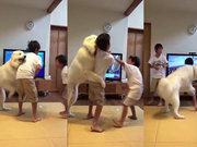 Kavga eden kardeşleri ayıran köpek