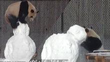 Kardan adam ile oynayan sevimli panda