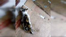 Donmak üzere olan yavru kediyi vatandaş kurtardı