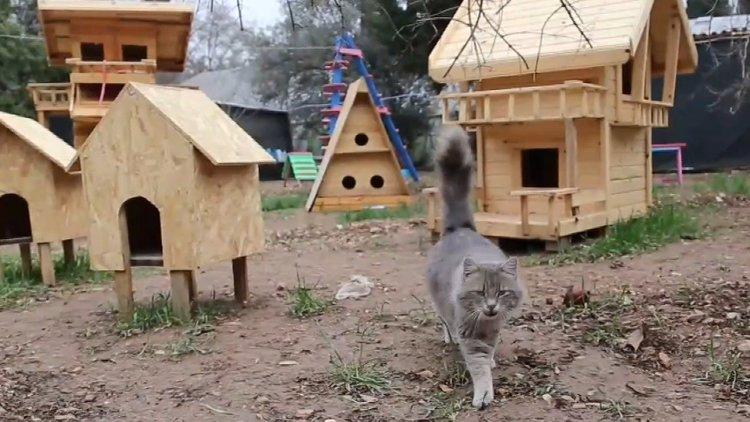 Kedi Köyünden İlginç Görüntüler