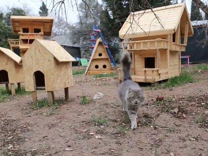 Kedi Köyü'nden İlginç Görüntüler