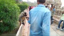Bu videodaki gerçek hayvanı bulun!