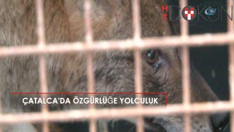 Tedavisi biten yaban hayvanlar doğaya bırakıldı