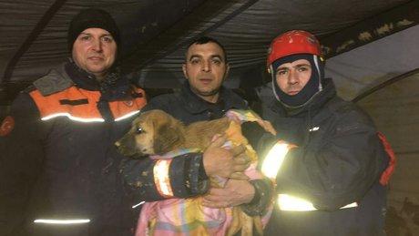 Kuyuya düşen yavru köpek 11 gün sonra kurtarıldı
