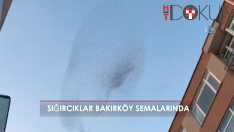 Sığırcık kuşları Bakırköy semalarında