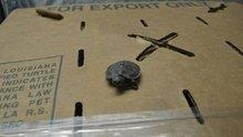4 bin yavru kaplumbağa gümrüğe takıldı!