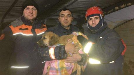 Beykoz'da kuyuya düşen köpeğin kurtarılma anı