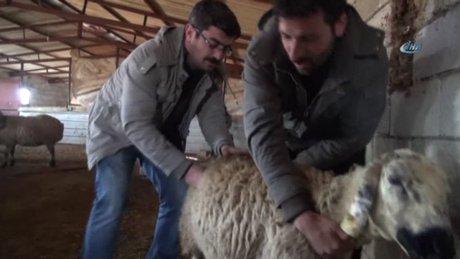 90 koyunun telef olduğu mahallede inceleme yapıldı