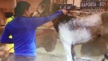 Oto yıkamada at yıkayan iki kişi ilginç görüntüler oluşturdu