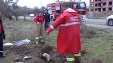 Çukurda mahsur kalan köpek ile 8 yavrusu kurtarıldı