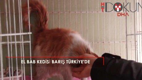 """El Bab'da kurtarılan kedi """"Barış"""" Türkiye'de"""