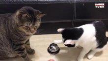 Akıllı kediler beslenme işini çözdü!