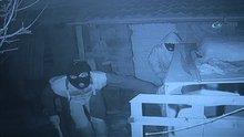 Tavus kuşu hırsızları kamerada