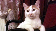 Antalya'da 'kedi patisi' eylemi