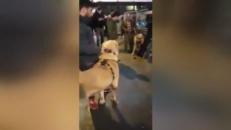 Hollanda'ya kangallı protesto