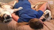 Hemşire ile birlikte uyuyan köpekler