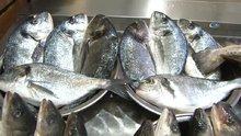 Eşkina balığının kafasından çıkan taşların böbrek taşına iyi geldiğine inanılıyor