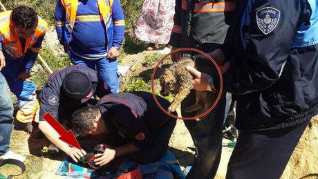 Beykoz'da sondaj kuyusuna düşen 2 yavru köpek kurtarıldı