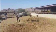 At, midilliye böyle çifte attı