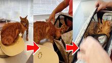 Arkadaşını veterinere vermeyen kahraman kedi