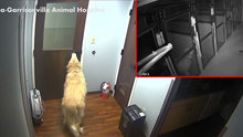 Hayvan hastanesinden kaçan akıllı köpek